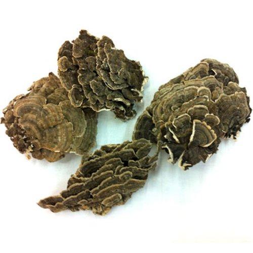 Pavo silvestre cola hongos Trametes Versicolor Yun Zhi la Coriolus Versicolor hierba 500g