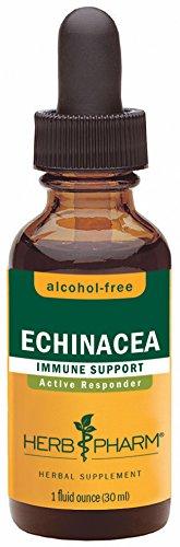 Pharm hierbas certificada orgánicas sin Alcohol Glycerite de la equinácea para apoyo inmune - 1 onza