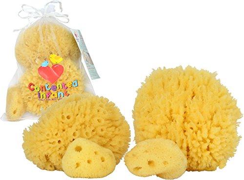 Esponjas de mar natural para el recién nacido, bebé y niño pequeño baño paquete 4: bebé hipoalergénico suave ducha Spa cuidado estuche por contento Infant (TM)