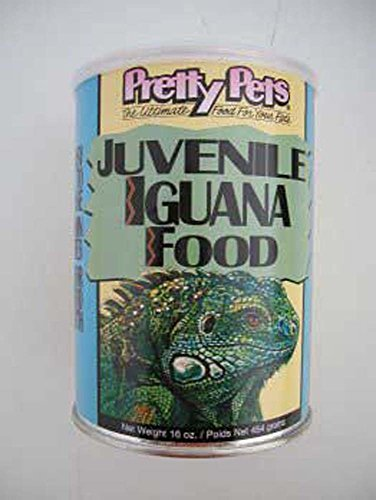 Bastante pájaro SPB77111 internacional juvenil Iguana alimento, 16 onzas